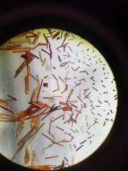 Microscope Crystals